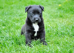 puppy04