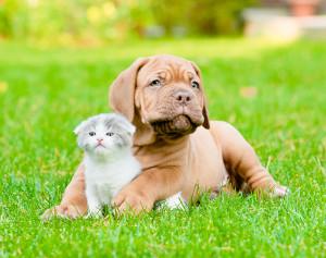 dog-cat01